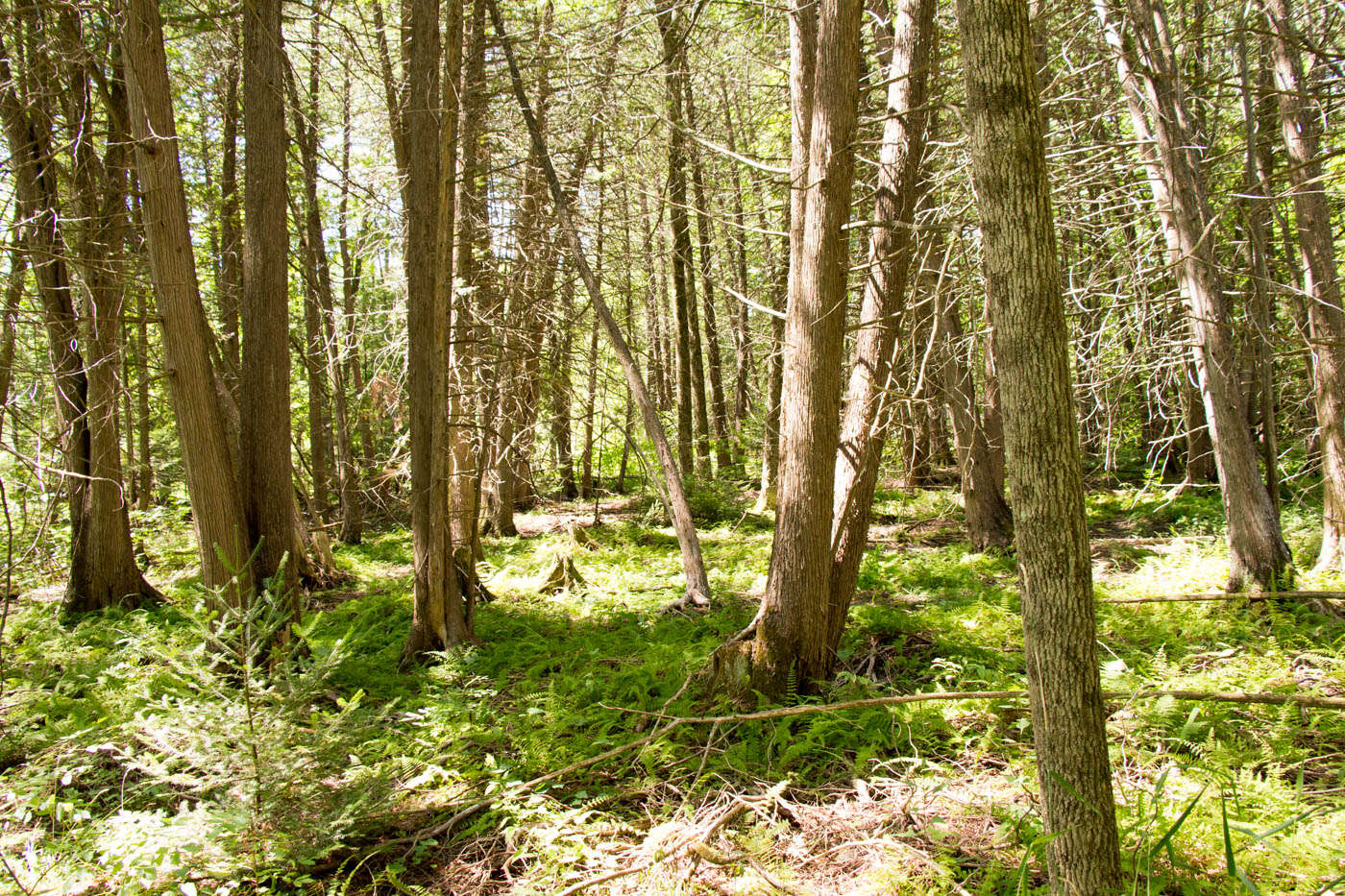 Madoc Forest